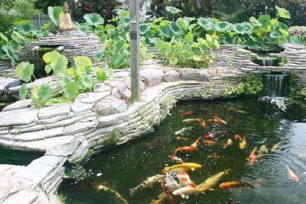 Thiết kế hồ cá koi mini ngoài trời