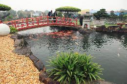 Mẫu hồ cá Koi ngoài trời mang phong cách Nhật Bản