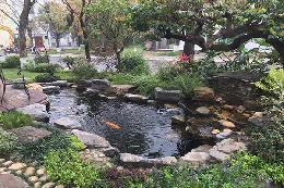 Phong thủy hồ cá koi