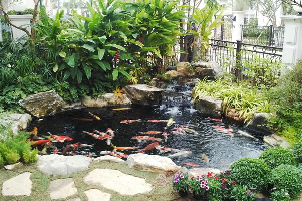 Mẫu hồ cá koi biệt thự dành cho góc sân vườn