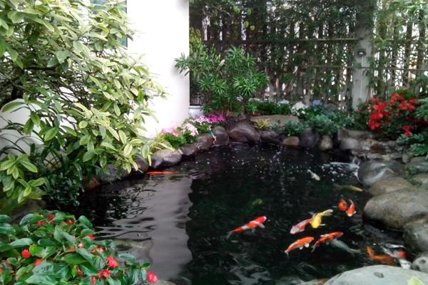 Mẫu hồ cá koi biệt thự sân vườn