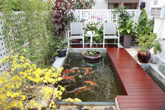 mẫu hồ cá koi mini phong cách hiện đại