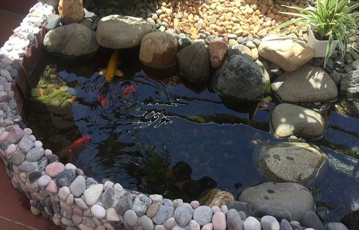 mẫu hồ cá koi mini trên sân thượng keesrt hợp sỏi đá