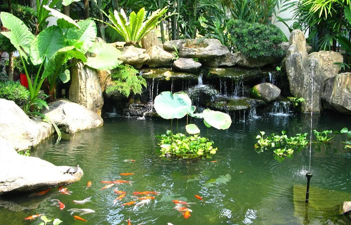mẫu hồ cá koi sân vườn hoang dã kiểu nhật