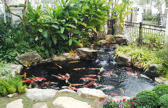 mẫu hồ cá  koi sân vườn nhà phố