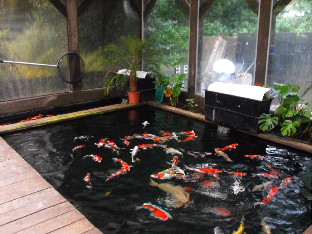 hồ cá koi trong nhà của chị oanh